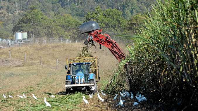 Cane harvesting along the Mackay-Eungella road near Pinaccle