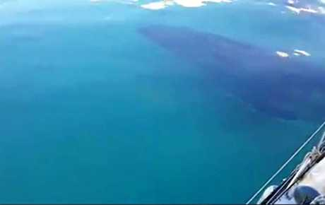 WHAT A THRILL: Bundaberg's Jason and Zeatta Baulch captured the moment two humpback whales swam under their yacht near Fraser Island on video.