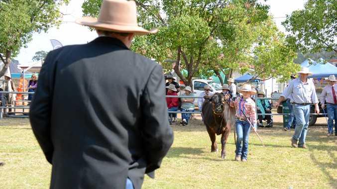 Bella Franz from Jandowae walks Tickle, a limousin heifer, past the cattle judge at the Wondai Show.