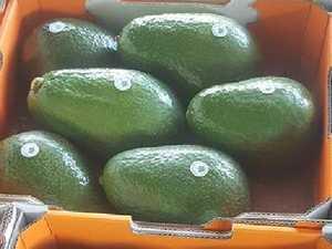 Massive 1.2kg 'Avozillas' up for sale