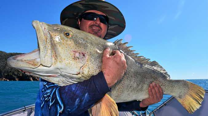 KING COD: Craig Wall with a guestimated 15-16 kg gold spot cod caught with Reel Addiction Sport Fishing.