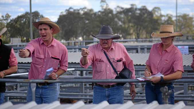 HUGE DAY: Byron Smith, Peter Fleming and Bree Taylor in action at the Dalby Saleyards on Wednesday.