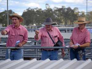 Cattle for sale hits five-year high