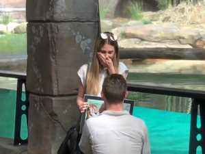 Crikey! Adorable zoo proposal