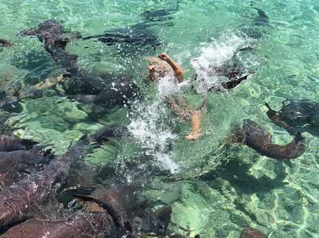 But then a shark bit her wrist before dragging her under.