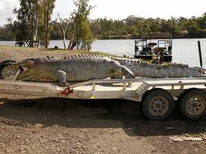 Biggest Croc survey in ten years released today