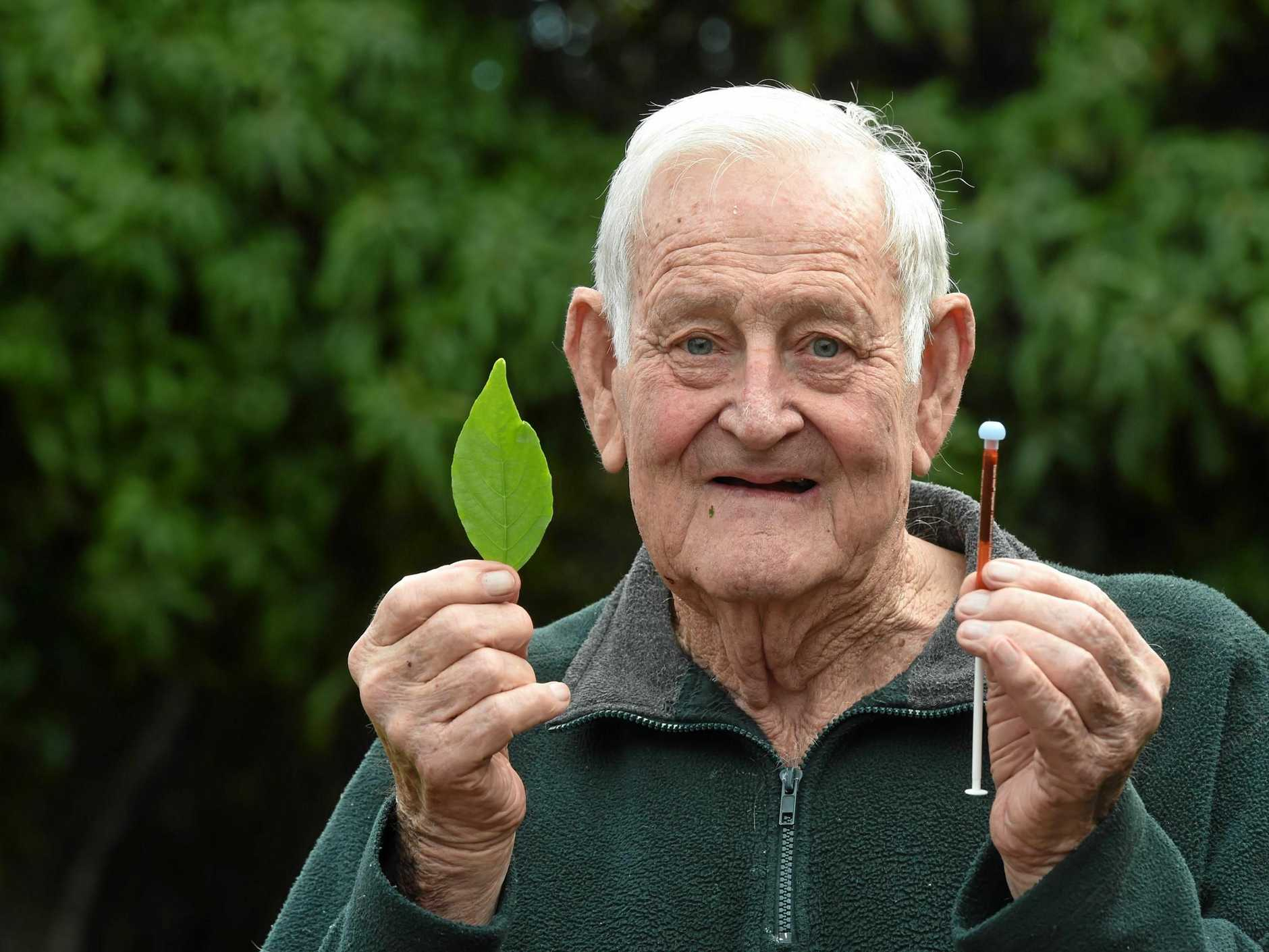 Ballina resident Don Ellison believes he was able to cure his diabetes with a plant he found in Thailand by eating the roots and leaves.