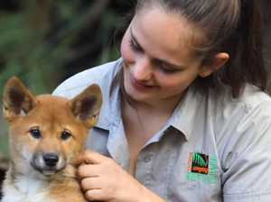 Dingo puppies named after dinosaurs