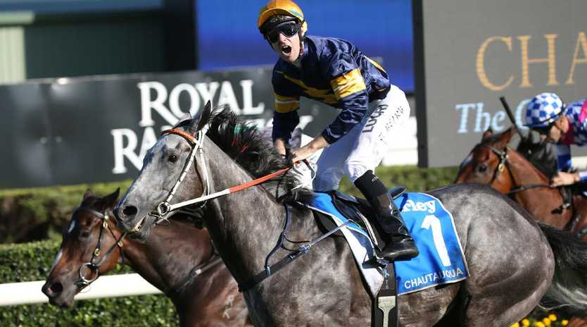 Chautauqua next heads to Sydney for a barrier trial later this month. Picture: David Moir/AAP
