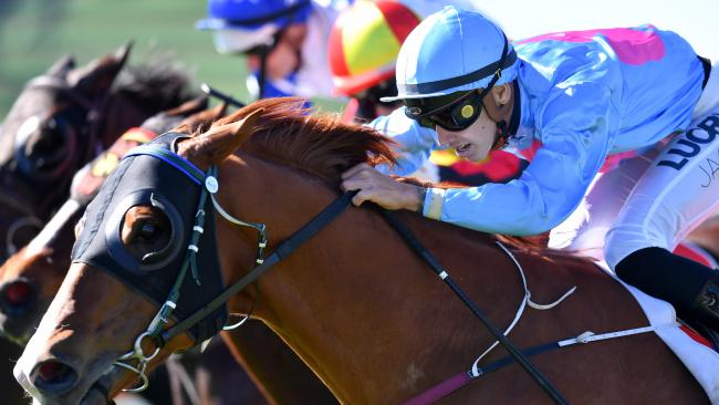 Jockey Jag Guthmann-Chester guides home Wild 'N' Famous on the Sunshine Coast. Picture: AAP