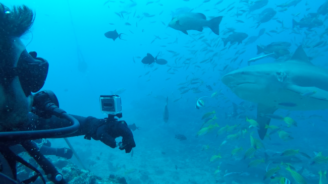 Mr Hay was surrounded by bull sharks in one of his most memorable dive experiences.