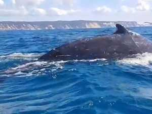 Kayaker has incredible humpback whale encounter