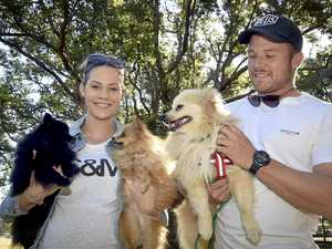 GALLERY: Pomeranian pups take over park