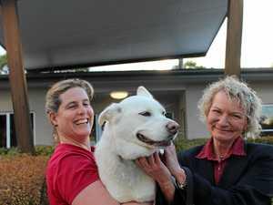 Stanthorpe vets need life-saving dogs