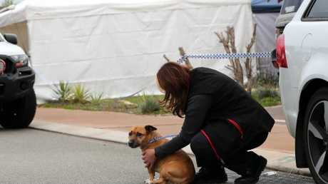Local council workers collect a dog from the house where three people were found dead. Picture: AAP Image/Trevor Collens