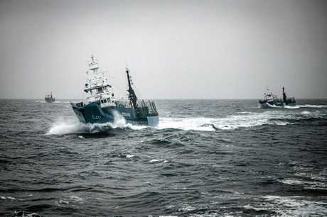 Three harpoon vessels approach the Sea Shepherd Fleet in formation for attack in February 2014