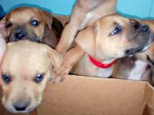 Can you help these adorable puppies find a home?