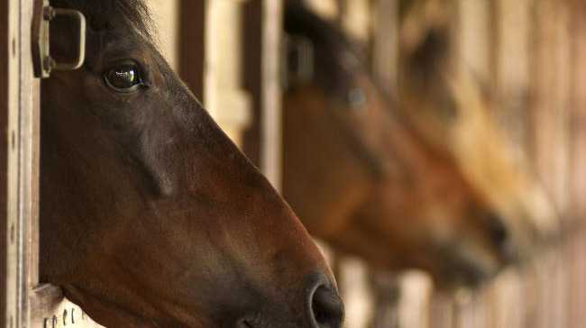 A Grafton man has been convicted for animal cruelty over two sexual acts committed with a horse. FILE PHOTO.