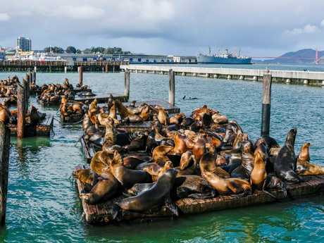 Pier 39 is a popular attraction. Picture: Lars Ploughmann
