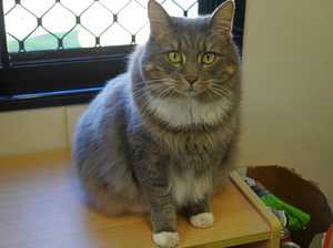 Friendly pets need rehoming