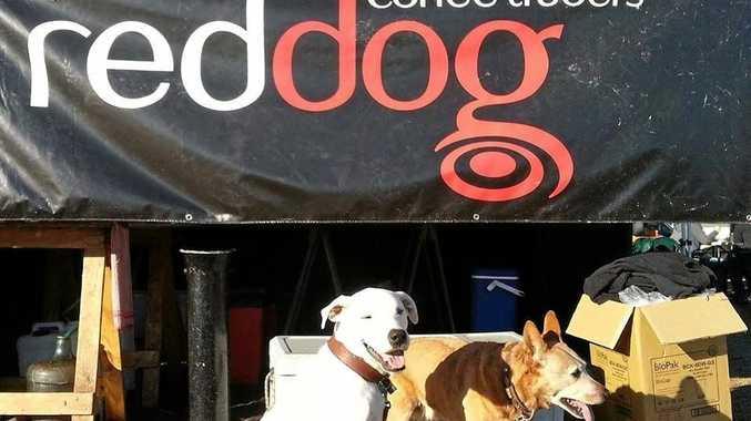 Red Dog coffee.