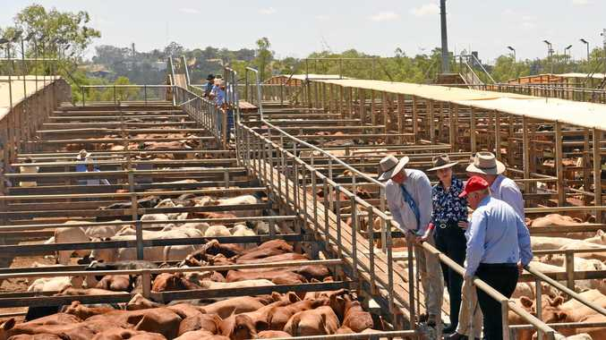 Federal funding secured for Roma saleyard facility
