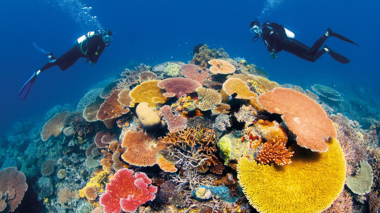 The donation by the jewellery giant will help fund the Great Barrier Reef Foundations Out of the Blue Box Innovation Challenge.
