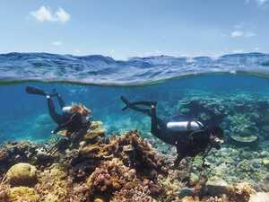 New breed of coral may save the Reef