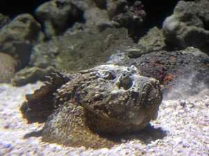 One person in hospital after suspected stonefish sting
