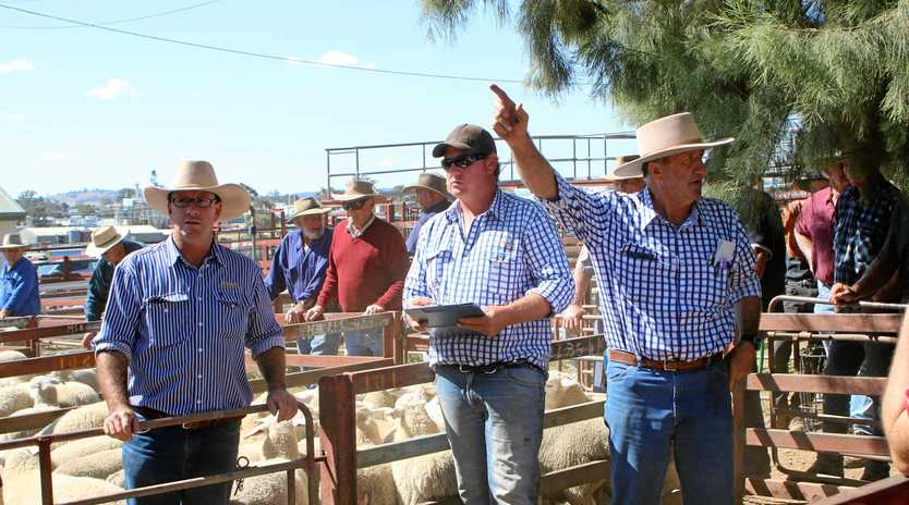 RAISING THE BAA: Warwick auctioneer David Friend (right) auctioning off at a sheep sale.