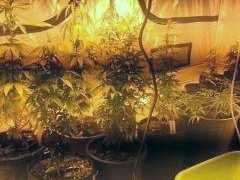 Mackay police dismantle drug grow house