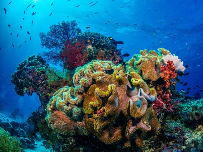 The average rate of recovery across the Great Barrier Reef showed a six-fold decline during the time period researchers looked at.