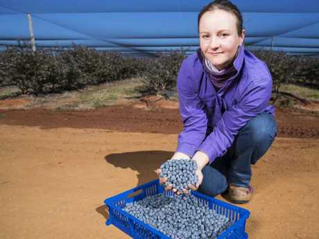 Sally Jolly from Smart Berries, which employs hundreds of people during peak season. Picture: Lachie Millard