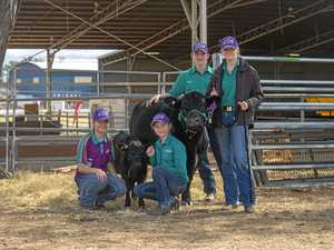 School cattle team on high after show success