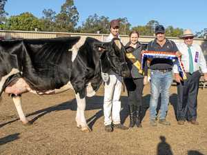 Udderly amazing attributes at Dairy showcase