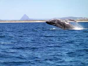 Sunshine Coast Afloat whale sightings