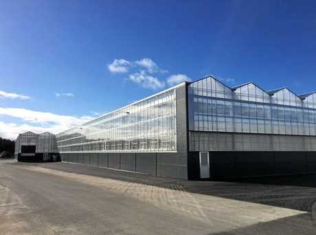 An example of a greenhouse for the cultivation of tomatoes by designer and manufacturers of sustainable greenhouses, Kubo, who is to design the medicinal cannabis greenhouse coming to Casino.