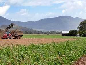 Cane growers set to buy back Mackay Sugar mill