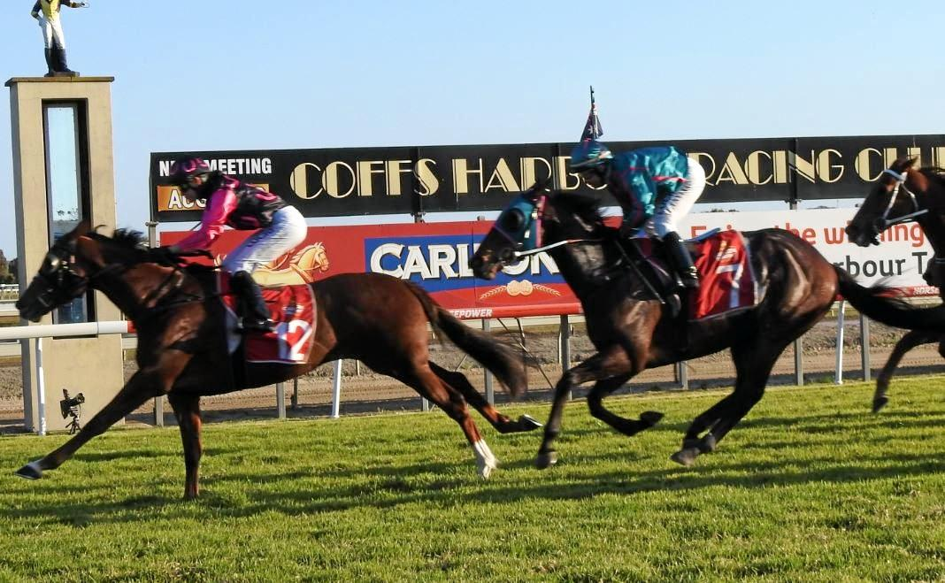 CUP HERO: Sawtell Cup winner Eight Below earns automatic entry into the big one on August 2.