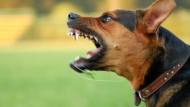A father threatened to kill a woman's dog after it attacked his son.