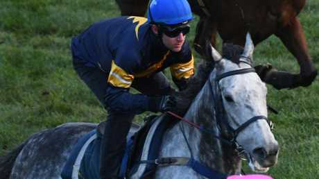 Tommy Berry and Chautauqua settle at the rear of the field after jumping out of the gates during a recent barrier trial at Flemington. Picture: Getty Images