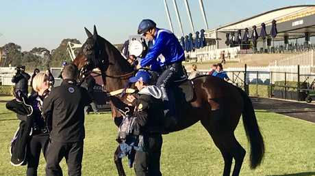 Winx before her barrier trial. The great mare had an easy circuit at Rose Hill.