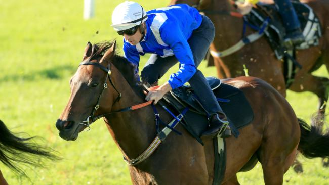 Hugh Bowman and Winx compete in a barrier trial at Rosehill Gardens. Picture: Getty Images