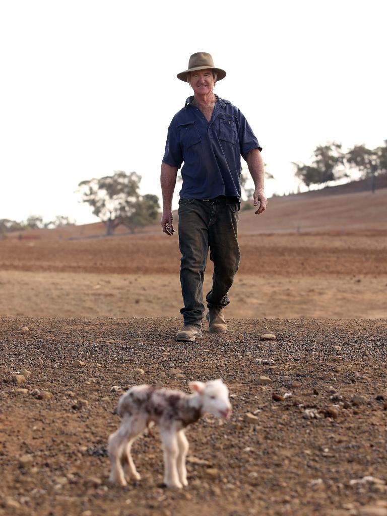 Mr Jones approaches a newborn lamb that has been abandoned. Picture: Sam Ruttyn
