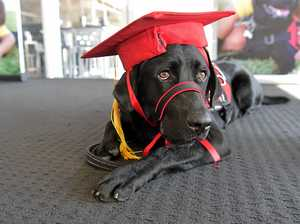 Smart Pups are a class above average