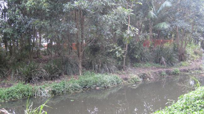 A track dug out along Bridgewater Creek at Wembley Park, Coorparoo, where sexual deviants have created hiding spots.