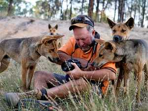 'They'll die': Dingo sanctuary owner's desperate plea
