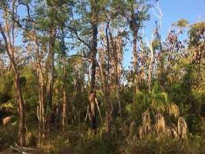 bats in baldwin swamp