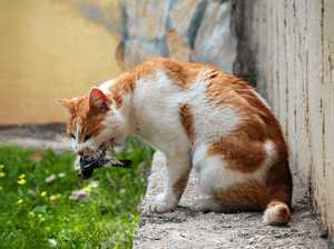 Claws out over irresponsible owners letting pets roam