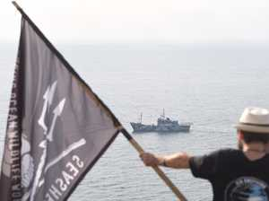 AMAZING PHOTO: Whale upstages Sea Shepherd's arrival